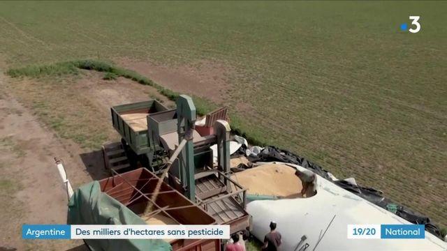 Argentine : les pesticides au cœur du débat