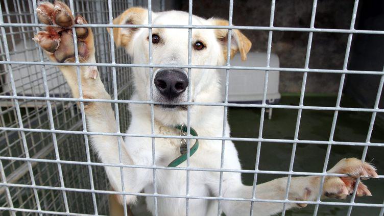 Au premier semestre 2017, les équipes de la SPA ont pris en charge3 430 chats et 2 973 chiens abandonnés par leurs maîtres.Image d'illustration. (MAXPPP)