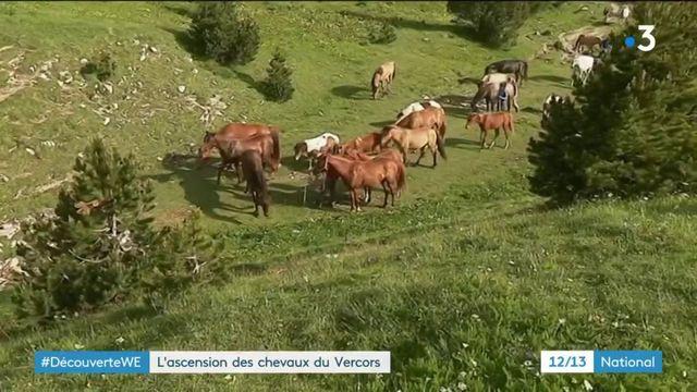 Massif du Vercors : les chevaux retournent à la nature pour l'été