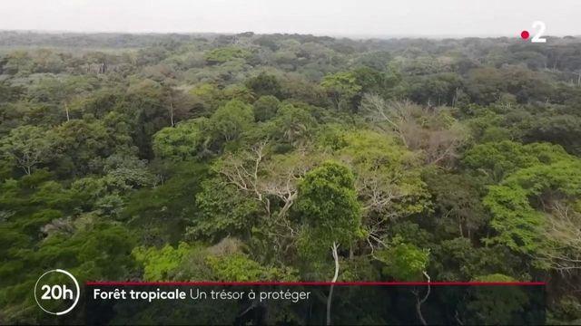 Afrique : les villageois prennent en charge la protection de la forêt tropicale