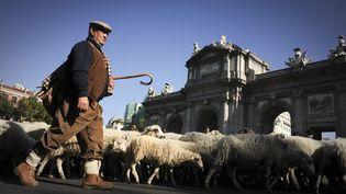 Madrid a accueilli la 18ème fête de la transhumance le 30 octobre 2011, où des milliers de moutons ont traversé la ville comme jadis. (PEDRO ARMESTRE / AFP)