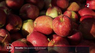 Malgré les aléas climatiques et une météo capricieuse ces derniers mois, la récolte des pommes s'annonce finalement bonne. Les saisonniers ont commencé à les ramasser. Illustration dans le Berry, à Saint-Martin-d'Auxigny (Cher). (CAPTURE ECRAN FRANCE 2)