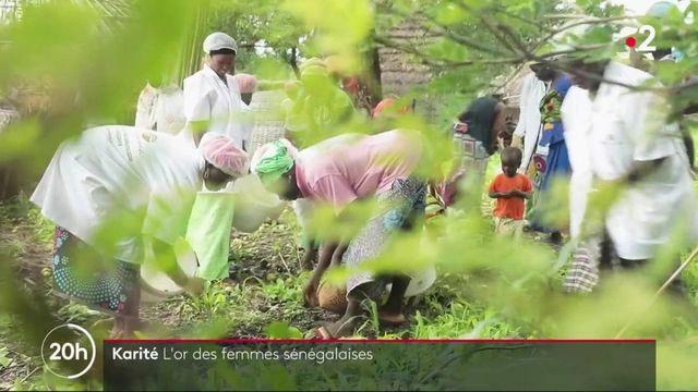 Sénégal : le karité fait travailler et vivre les femmes