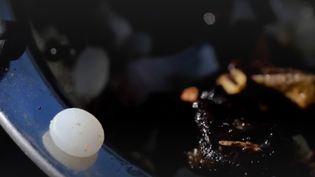 En Bretagne, des bénévoles ratissent les plages pour ramasser des larmes de sirène. Ces microbilles sont l'un des fléaux de nos océans, du plastique issu du pétrole. La récolte s'élève à plus d'une centaine de kilos, ce mois-ci. (FRANCE 2)