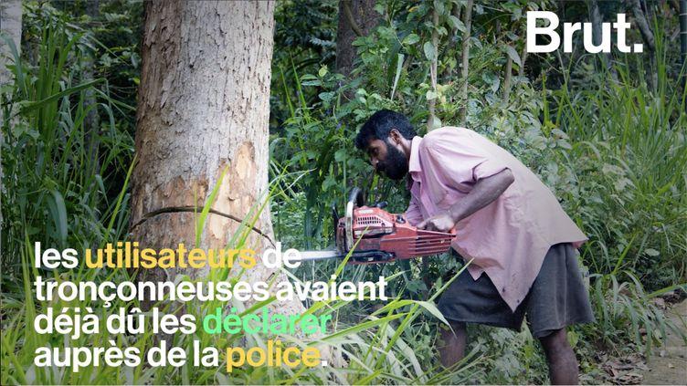 Maithripala Sirisena, le président sri lankais, a mis en place des mesures drastiques pour mettre un terme à l'exploitation illégale de la forêt. (BRUT)