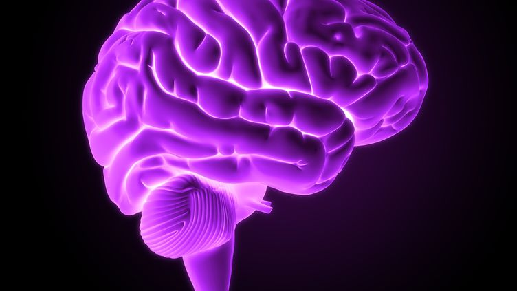 Image de synthèse représentant un cerveau humain. Le cervelet se trouve dans la partie inférieure. (SKX / AFP)