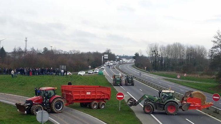(Les éleveurs tirent depuis des mois la sonnette d'alarme en raison des cours trop bas, inférieurs aux coûts de production © Radio France / France Bleu Armorique)