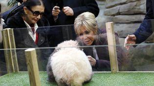 Brigitte Macronest la marraine deYuan Meng. Elle participait à à la cérémonie durant laquelle le jeune panda a été baptisé, le 4 décembre au zoo de Beauval(Loir-et-Cher). (THIBAULT CAMUS / AFP)