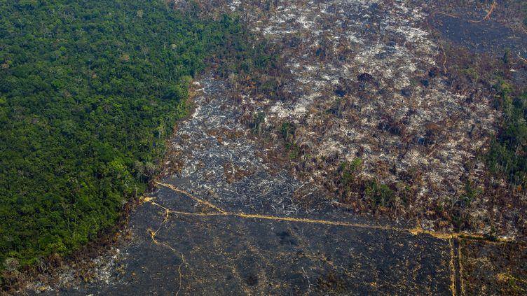 La déforestation de l'Amazonie dans la réserve biologique Nascentes da Serra do Cachimbo, au Brésil, le 28 août 2019. (JOAO LAET / AFP)