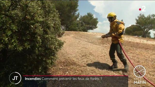 Bouches-du-Rhône : les sapeurs forestiers, une unité cruciale pour la prévention des incendies