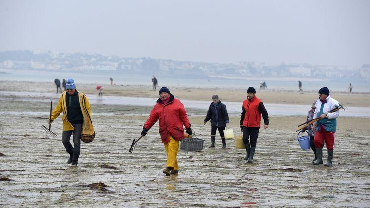 Pour cause de grandes marées, les préfectures du Calvados, de la Seine-Maritime, du Finistère et du Morbihan appellent les pêcheurs à pied à la plus grande vigilance. (VINCENT MOUCHEL / MAXPPP)