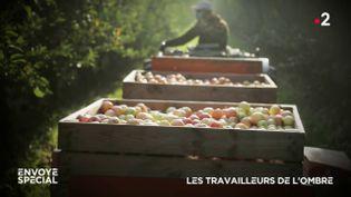 Envoyé spécial. Les travailleurs de l'ombre (ENVOYÉ SPÉCIAL  / FRANCE 2)