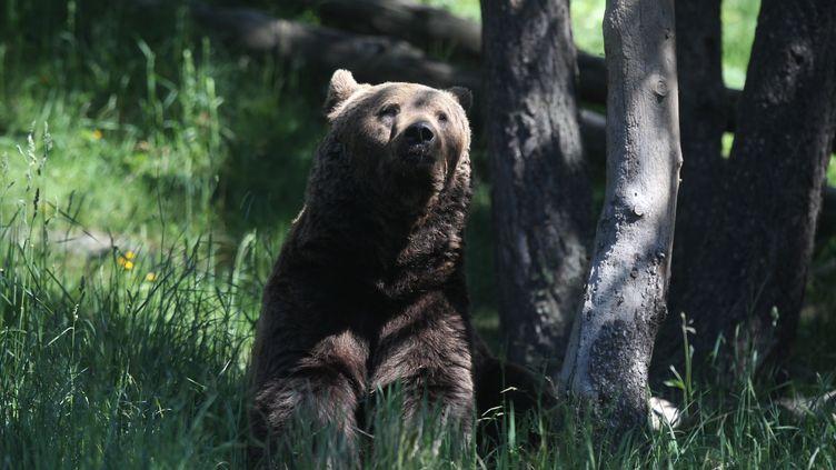 Une centaine d'élus ont manifesté le 6 aoûtà Toulouse devant la préfecture d'Occitanie, pour réclamer le retrait de l'ours des Pyrénées ariégeoises. (RAYMOND ROIG / AFP)