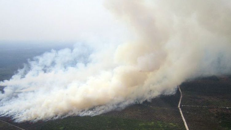 Comme chaque année pendant la saison sèche, l'Indonésie est ravagée par des incendies de forêts et de terres agricoles provoqués par la culture sur brûlis. (STR / AFP)