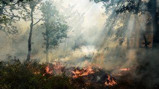 Un incendie en cours à Artigues (Var) où les flammes ont déjà ravagé 250 hectares de forêt, le 25 juillet 2017. (ANNE-CHRISTINE POUJOULAT / AFP)