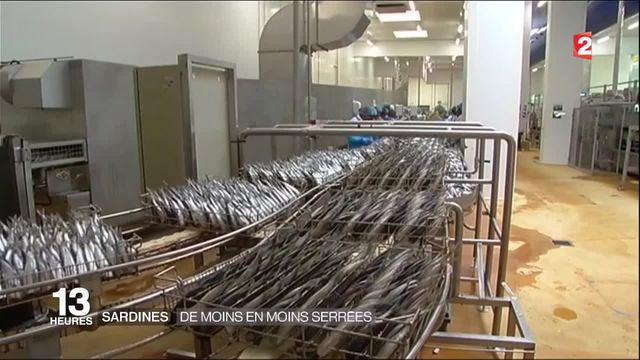 Sardines : vers une pénurie ?