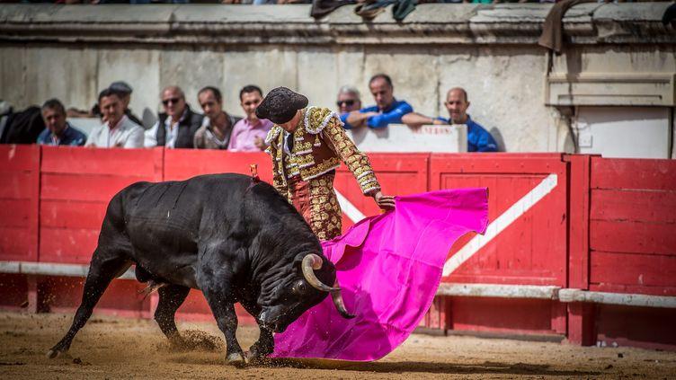 Une corrida le 18 septembre 2016 à Nîmes dans le Gard. (Photo d'illustration) (MAXPPP)