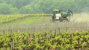 Habiter près d'un vignoble est-il dangereux pour la sante ? Une étude va être lancée dans six régions viticoles pour mesurer l'exposition de la population aux pesticides.  (FRANCE 3)