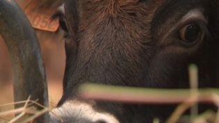 Le Salon de l'agriculture fermera ses portes dimanche 3 mars. À cette occasion, France 2 s'intéresse aux espèces rares. (FRANCE 2)