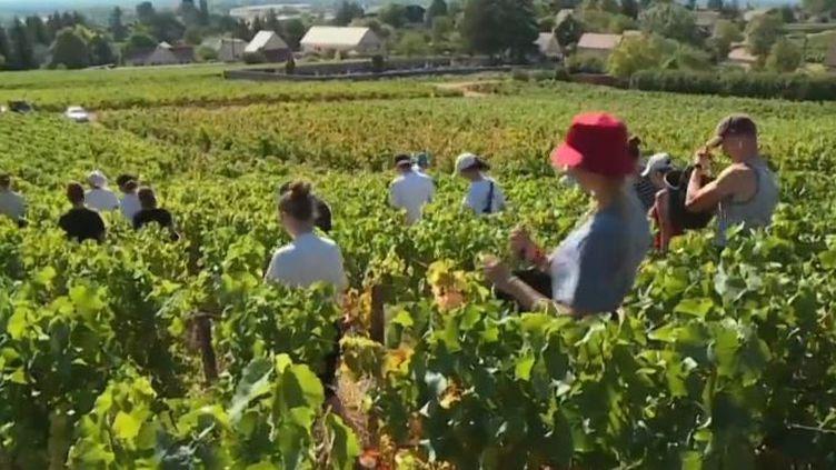 La rentrée rime aussi avec les vendanges. Cette année, elles ont commencé avec quelques semaines d'avance. En plus des masques et la distanciation, certaines communes viticoles proposent aux saisonniers d'être testés gratuitement. (FRANCE 3)