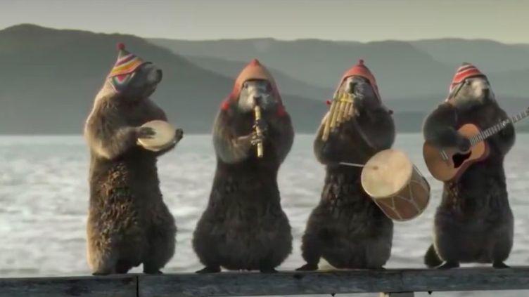 Les petites marmottes sont les mascottes de France 3 : on les retrouve dans des clips juste avant les journaux de la chaîne. Elles cartonnent désormais aux États-Unis sur les réseaux sociaux. (France 3)