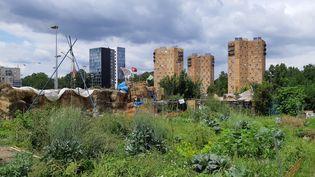 Les jardins ouvriers d'Aubervilliers (Seine-Saint-Denis) vont être détruits pour construire une piscine olympique pour 2024. (HAJERA MOHAMMAD / RADIO FRANCE)
