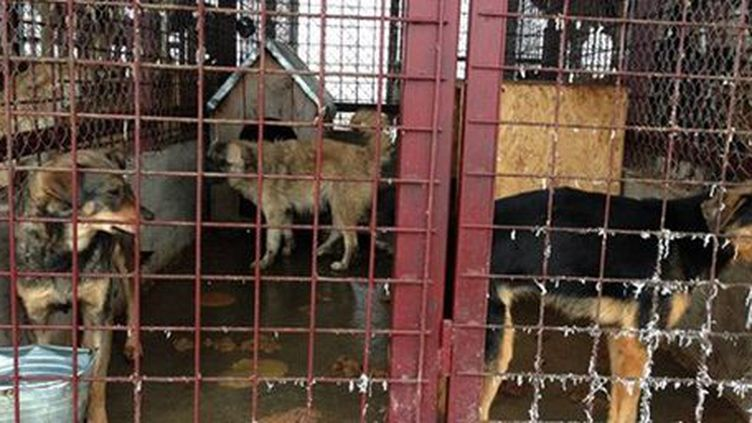 Refuge pour chiens en Roumanie. (Mukitza)
