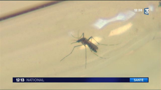 Var : réapparition du chikungunya