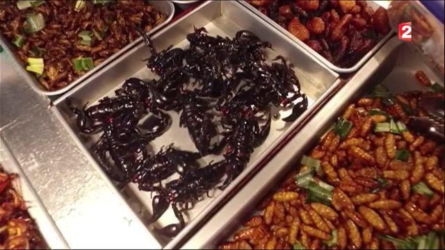 Gastronomie : les insectes sont-ils la nourriture de notre avenir ?