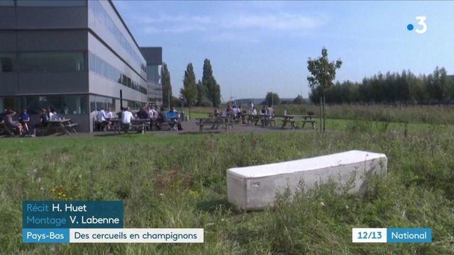 Pays-Bas : des cercueils écologiques en champignons