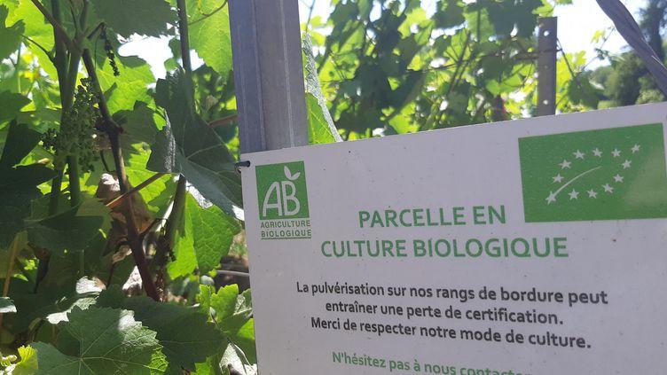 Pancarte sur des vignes de Champagne bio. (AURÉLIE JACQUAND / FRANCE-BLEU CHAMPAGNE)