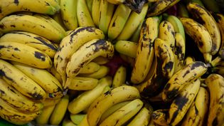 Les Ougandais consomment onze millions de tonnes debananes par an. (REUTERS/VINCENT WEST)