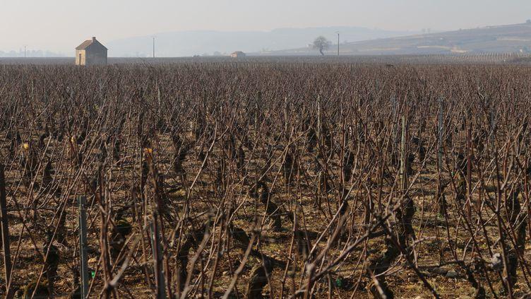 Des vignes à perte de vue, à l'entrée de Beaune (Côte-d'Or), le 12 février2015. (BENOIT ZAGDOUN / FRANCETV INFO)