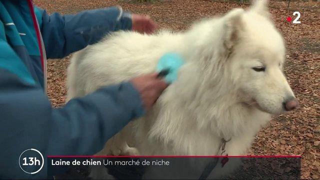 Allemagne : une start-up fabrique des vêtements en laine de chien