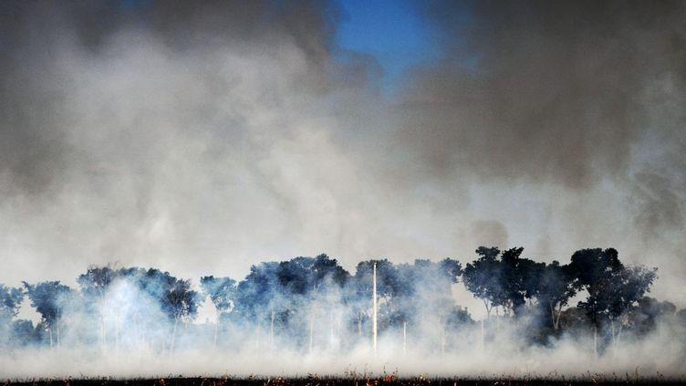 De la fumée provenant d'un incendie criminel près d'une forêt protégée à Sino, dans l'Etat du Mato Grosso au Brésil, le 9 août 2020. (CARL DE SOUZA / AFP)