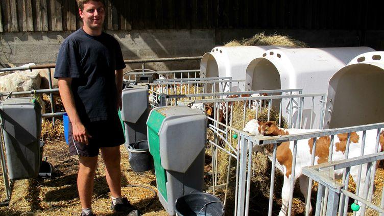 Florent Verger s'occupe des veaux dans son exploitation de Monteille, près de Lisieux (Calvados), le 23 juillet 2015. (MARIE-VIOLETTE BERNARD / FRANCETV INFO)
