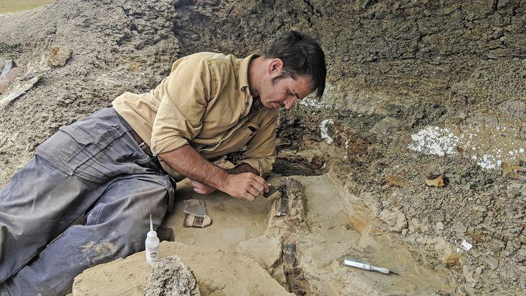Le scientifique américain Robert DePalmasur le site de Tanis, dans le Dakota du Nord (Etats-Unis), le 5 août 2018. (ROBERT DEPALMA / KANSAS UNIVERSITY / AFP)