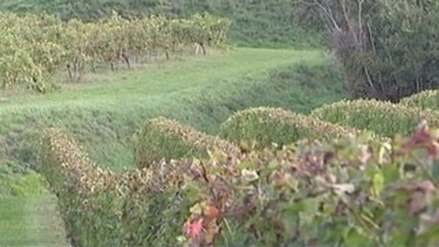 Pesticides : une famille porte plainte contre X après la mort d'un viticulteur