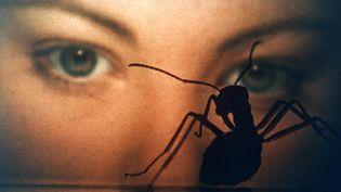 """Lynne Frederick dans """"Phase IV"""" de Saul Bass. (Copyright Swashbuckler Films)"""