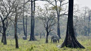 Des éléphants en Inde. (Illustration). (DAVID TALUKDAR / AFP)