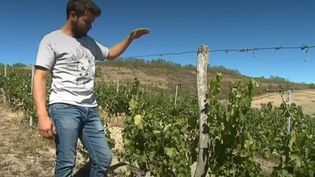 La situation est critique pour les agriculteurs sur une grande partie du territoire. Les orages des derniers jours n'ont pas suffi à inverser la tendance : la sécheresse est sévère. (FRANCE 3)