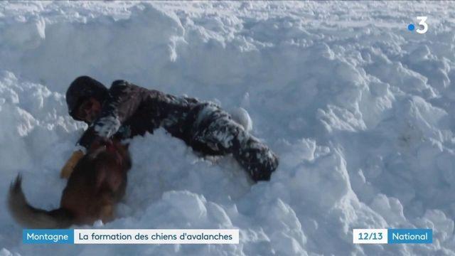 Montagne : comment sont formés les chiens d'avalanches ?