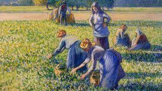 """""""La cueillette des pois"""" est une gouache du peintre impressionniste Camille Pissarro réalisée en 1887  (Wikimedia Commons )"""