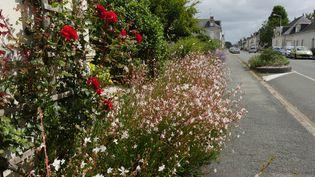 """Dans la rue principale de la Ménitré, les plantes """"mangent"""" le bitume. (ISABELLE MORAND / RADIO FRANCE / FRANCE INFO)"""