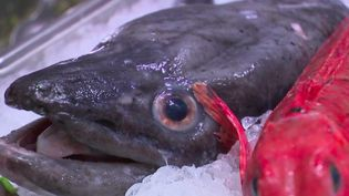 """Des pêcheurs bretons ont lancé une campagne de publicité pour nous inciter à manger des """"poissons moches"""". Ce sont des poissons qui sont très bons mais beaucoup moins connus que d'autres. Et ils sont surtout moins chers... (France 2)"""