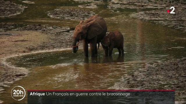 Afrique : un Français en guerre contre le braconnage