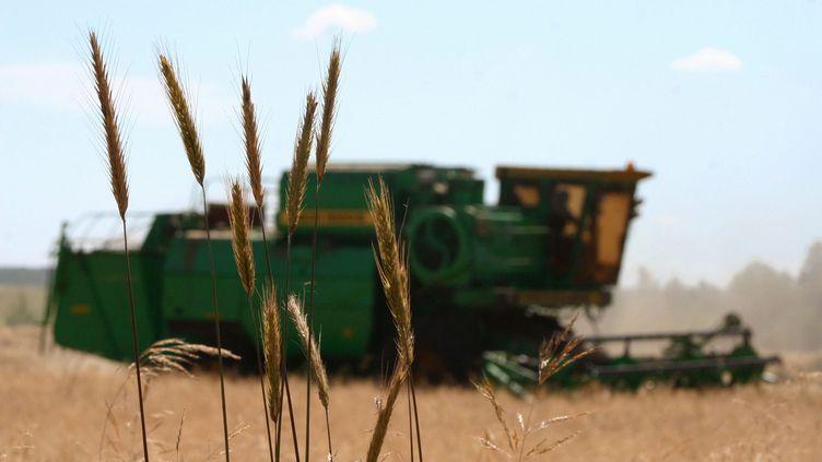 Récolte de blé en Russie (MAXPPP)
