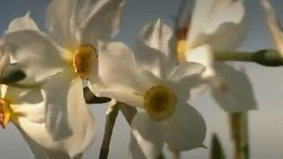 Narcisses (France 3)