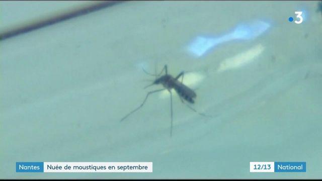 Moustiques : pourquoi sont-ils de retour ?