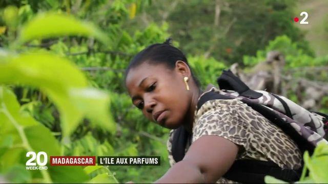 Madagascar : l'île au parfum d'ylang-ylang